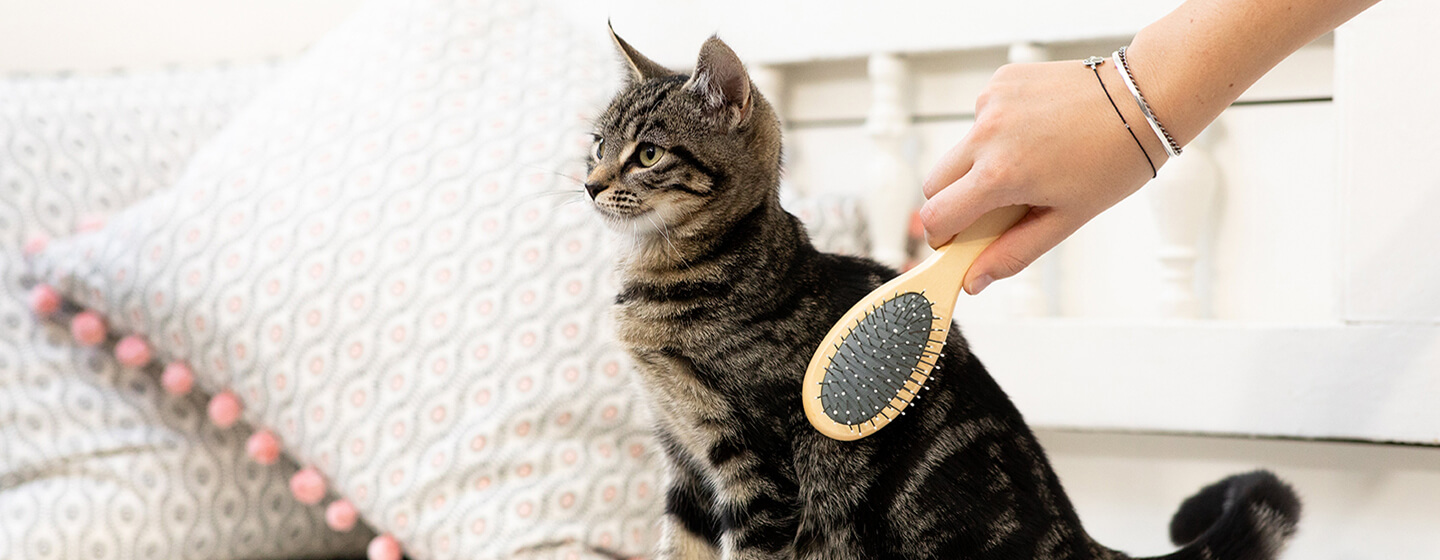 Skilled Or Do it yourself Cat Grooming in Fort Lauderdale